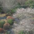 にっぽん丸 別府花火と瀬戸内海クリスマスクルーズ  鶴見岳からの眺望
