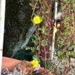 多肉植物の花🌼