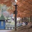 ムーミン谷の晩秋は子供たちの歓声で賑わっていました@あけぼの子どもの森公園