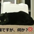 黒猫大好き!!