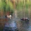 ストックフォトには出さないケド狭山池公園の秋