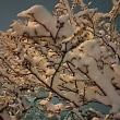 段ボールで雪かき