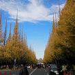 神宮の銀杏