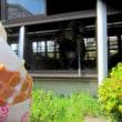 町田薬師池公園・四季彩の杜 ダリア園