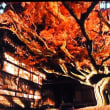 福岡県内人気1位、樹齢400年糸島の雷山千如寺の大楓が見頃だそうです
