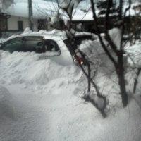 車も埋まる。