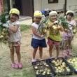 玉ねぎを収穫!!