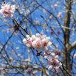 ~ 春らしい陽気になるよ! ~