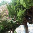元気な木々