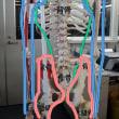 機能解剖の学びの基礎を見落とさずに…
