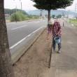 沿道にコスモスの種撒きましたよ。