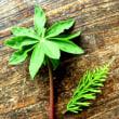 植物瞑想~植物の中にある宇宙を見る
