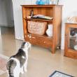 ネコと陶器
