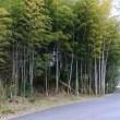 奈良県天理市・別所鑵子塚(かんすづか)古墳