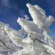 釈迦ヶ岳(二百)②☆今シーズン初の青空と霧氷!