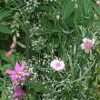 紫陽花とヘメロカリス