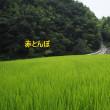 斜面の草刈り