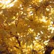 ご近所晩秋の色 &拉致問題