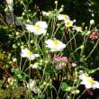 庭の色どり