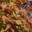 秋の1日(*^^*)
