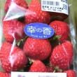 旬。イチゴ(^_^)