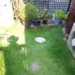 我が家の庭の芝刈りしました‼️