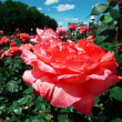 神代植物公園の花たち