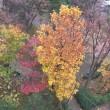 12/2 黄葉のシナマンサクと花壇の花