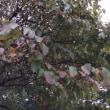 いつの間にか、秋。