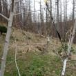 アロニアの枝