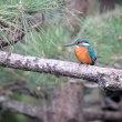 鶴見緑地のお馴染み小鳥達