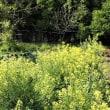 [福田財務次官辞任]麻生氏の責任は免れぬ/「調査ノー」署名拡大 弁護士ら2.7万筆/キンリョウヘンを日本ミツバチの待ち箱にセット。カトレアの植え替え