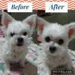Before☆After