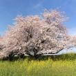 土筆摘みと春のお花とそっくりにゃん♪