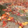 紅葉の落ち葉・・・