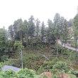 雨中の伐採