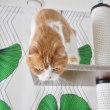ネコとして残念なタワーからの降り方