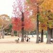 今日は曇りでした。日差しのない紅葉はどうでしょうか。