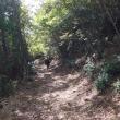 護摩山、今西林道へ 2