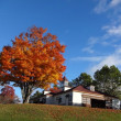 紅葉狩り maple-viewing