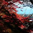 『紅葉谷』 紅葉狩り