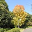 秋色に染まる頃