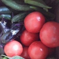 友より 新鮮野菜 たくさん戴く!