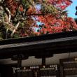 紅葉(大雄山最乗寺)