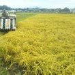 稲刈りの日々。