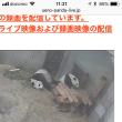 だららんパンダ(≧∀≦)