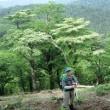 山犬切(やまいんぎり)標高1,562m 熊本県五家荘泉/九州百名山地図帳57座