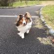 お兄ちゃんとお散歩ルンルン