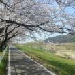 夢前川 桜道