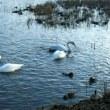 カンポの湯と田尻池